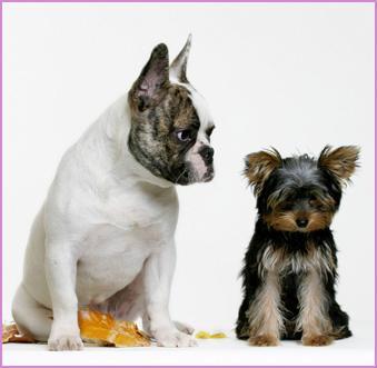 chiens011.jpg