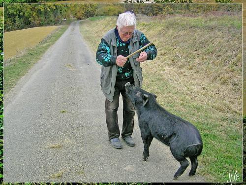 cochon-noir-gascon-marcel-dresseur-de-cochon-rscn4698-thumbnail.jpg